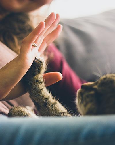 cat_hand